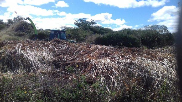 111-1-693x390 Secretaria de agricultura de Monteiro realiza silagem de mais de 18 mil Kilos no Sítio Jabitacá