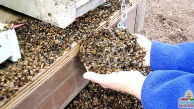Deputado defende projeto que proíbe agrotóxicos que matam abelhas 6