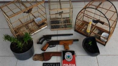 Em Monteiro: Homem é preso por posse irregular de arma de fogo de uso restrito, crime ambiental e plantar maconha em casa 5