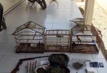 Homem é preso por tráfico de drogas e animais silvestres em Monteiro 49