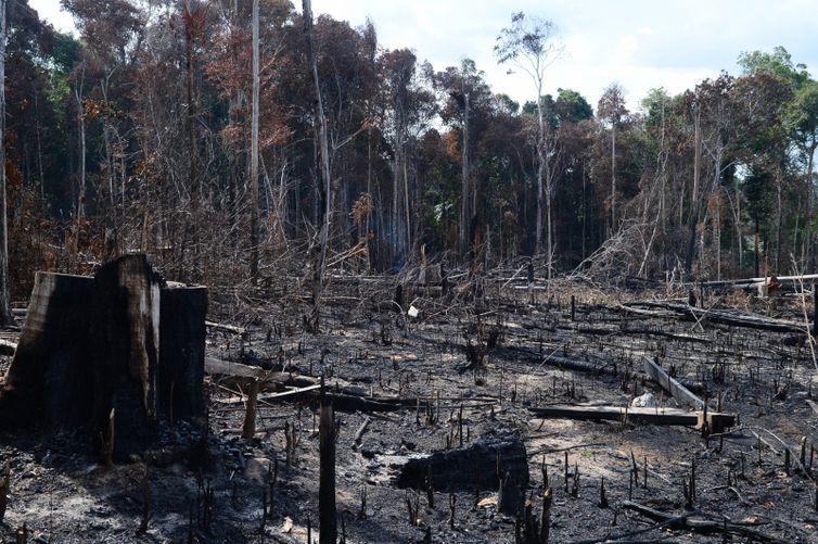 desmatamento-amazonia Governo prevê R$ 115 mi a mais para fiscalização ambiental e emprego da Força Nacional na Amazônia