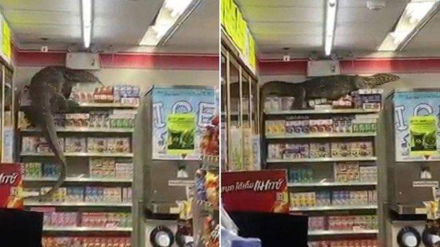 dragao-de-komodo Dragão-de-komodo invade supermercado e escala prateleiras
