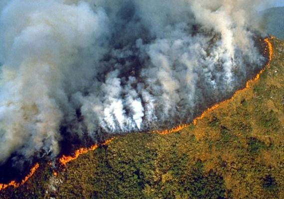 2019-08-22-19_44_09-Jaden-Smith-@c.syresmith-•-Instagram-photos-and-videos-569x400 Câmara aprova lei que acaba com o licenciamento ambiental no Brasil