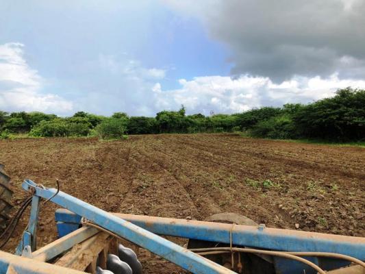 Corte-de-terra3-533x400 Secretaria de Agricultura realiza ações de corte de terra em várias comunidades rurais