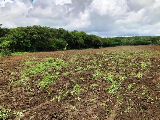 Corte-de-terra5-533x400 Secretaria de Agricultura realiza ações de corte de terra em várias comunidades rurais