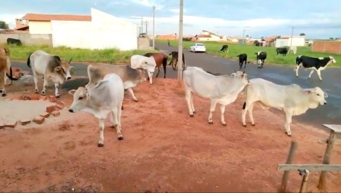 Prefeitura-de-Monteiro-realiza-servico-de-apreensao-de-animais Prefeitura de Monteiro realiza serviço de apreensão de animais em vias públicas