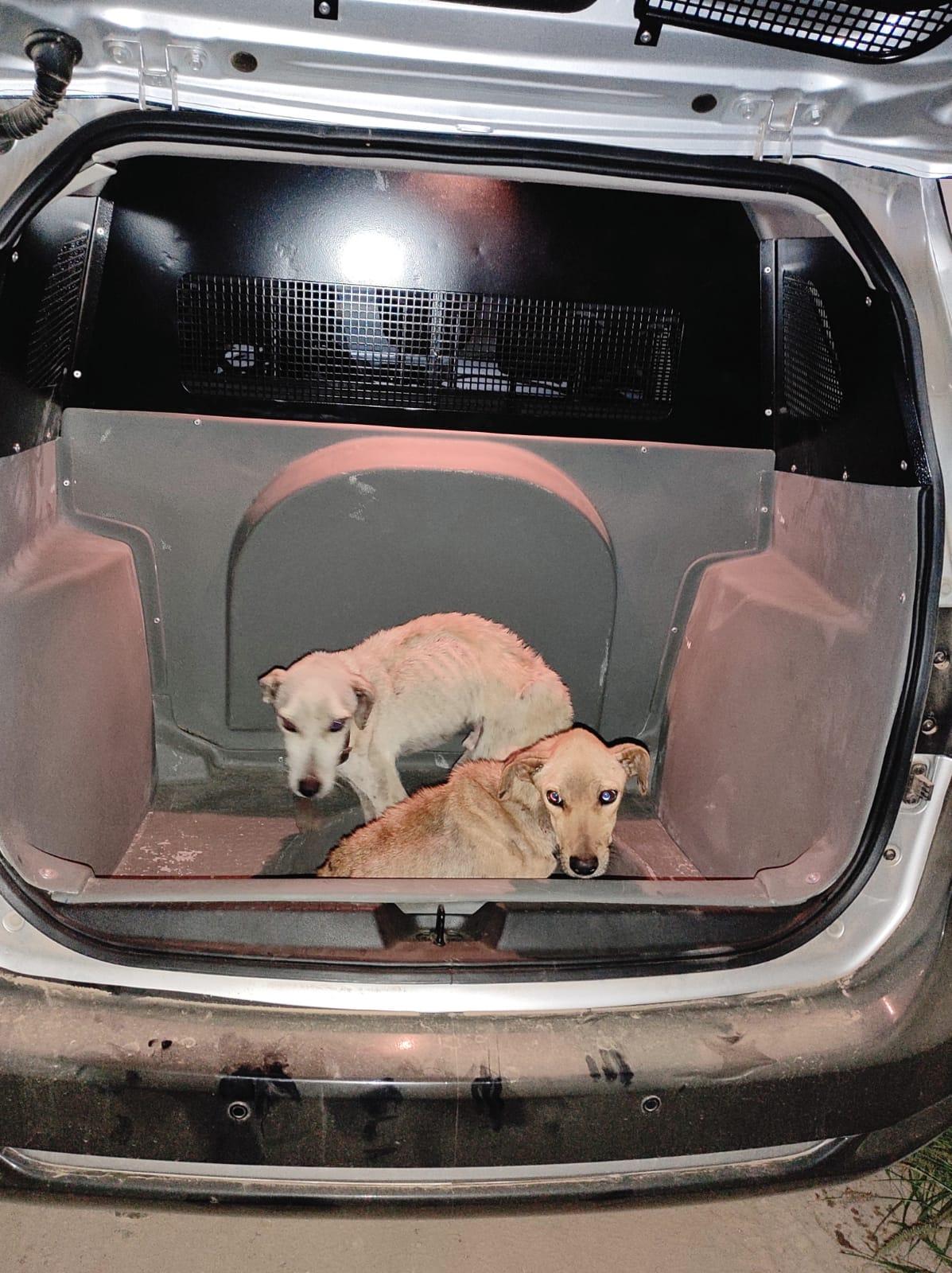 WhatsApp-Image-2021-08-31-at-03.05.22 Polícia resgata cachorros mantidos em situação de maus-tratos em Monteiro