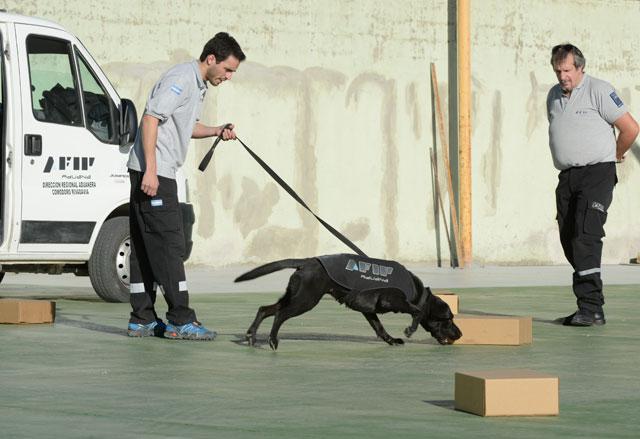 AFIP hizo demostraciones con canes de la Aduana, en 32 escuelas del país, incluyendo Río Gallegos