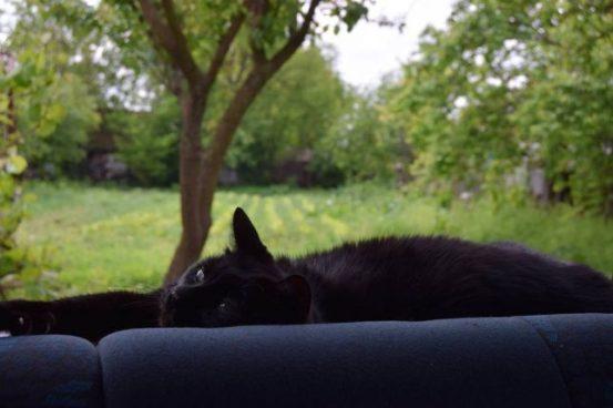 o pisica neagra verde