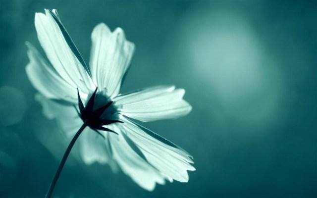 autumn-light-flower-wide (Medium)