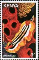 stamp Chromodoris quadricolor - Kenya