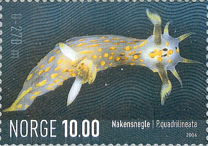 stamp Polycera quadrilineata - Norway
