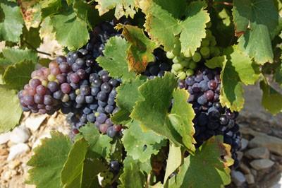 Unterwegs in Weinanbaugebieten