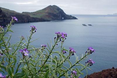 Westküste Madeiras