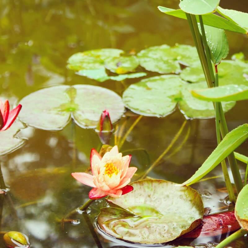 Teich im Garten in Suzhou