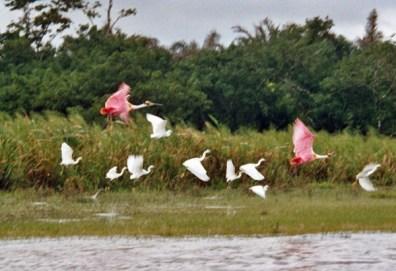 Vögel in Costa Rica