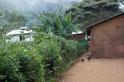 Yamba in den Usambarabergen