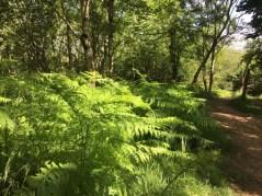 Wanderung durch Cheddar Gorge