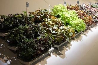 Mutierte Pflanzen