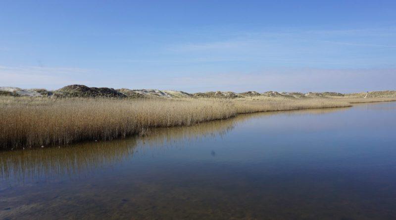 Kleiner See in den Dünen