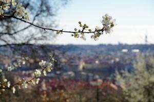 Meine 13 Tipps für Prag