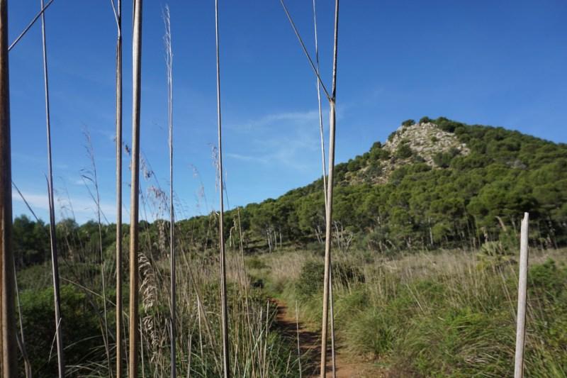 Blick auf den Puig s'Agulla