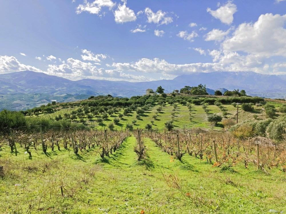 Blauer Himmel und grüne Wiese auf Kreta