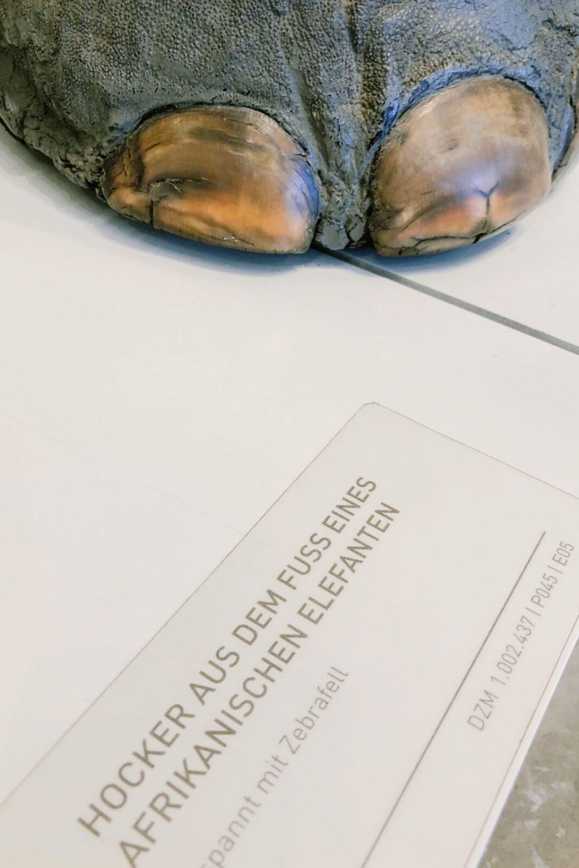 Im Zollmuseum in Hamburg: ein Hocker aus einem Elefantenbein
