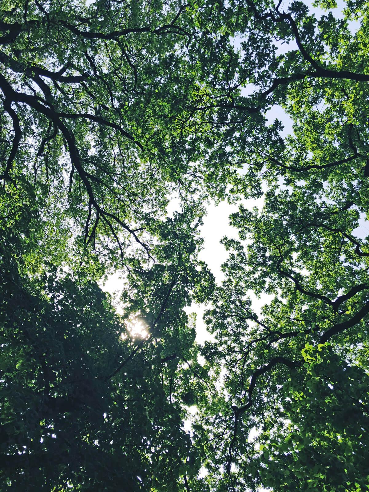 Schlosspark Stammheim: Wo Kunst auf Natur trifft