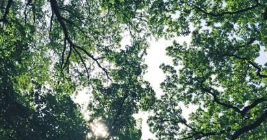 Unter den hohen Bäumen