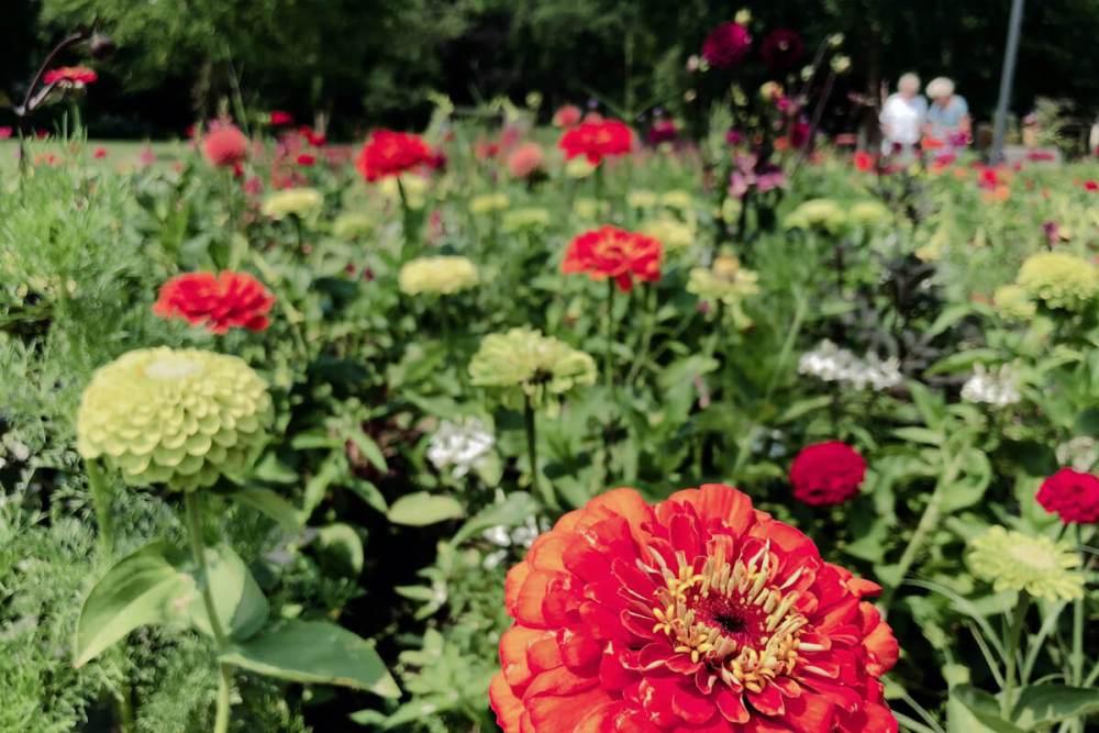 Blumen gehören zu einer Gartenschau