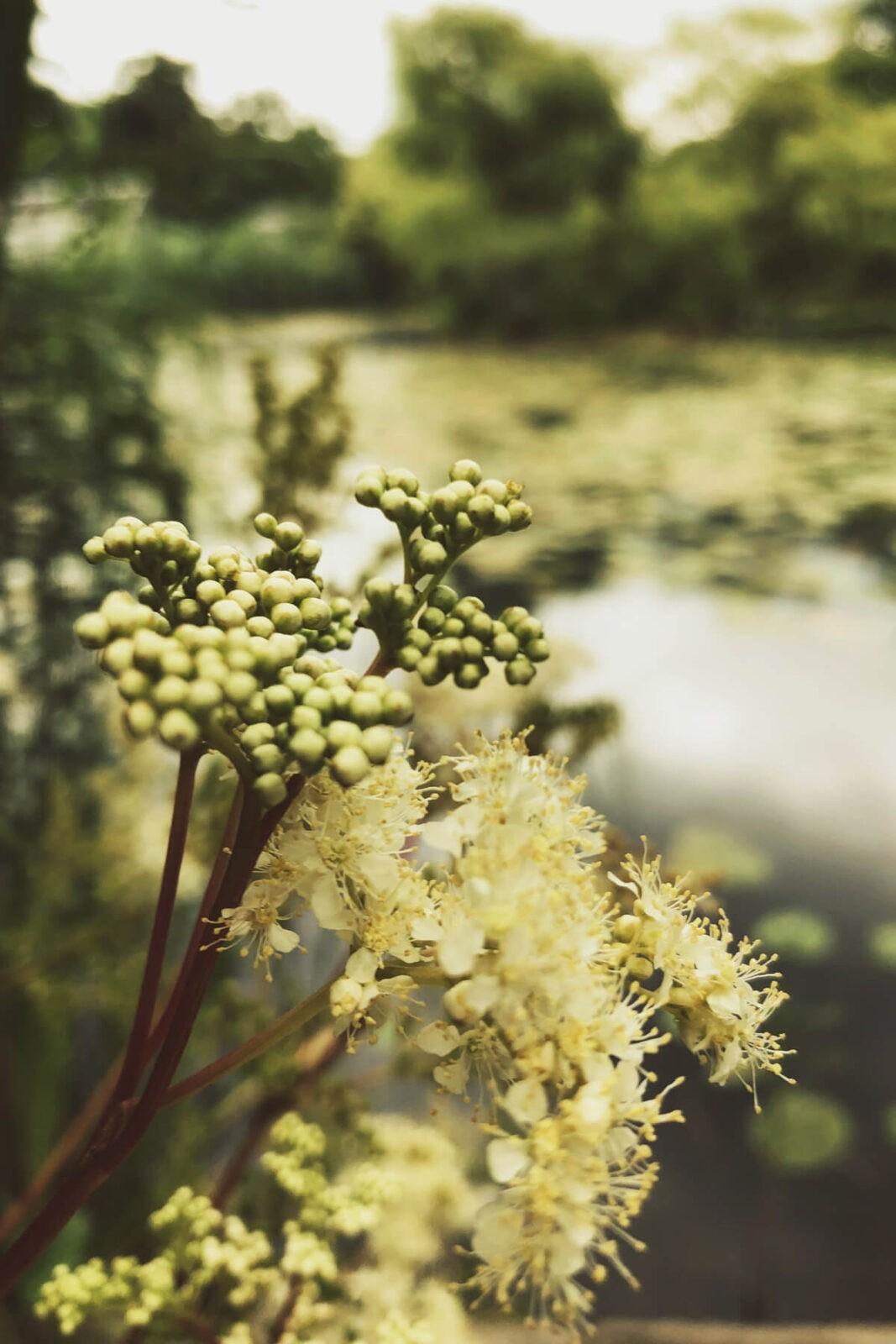 Moment der Ruhe im Botanischen Garten