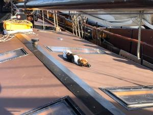 Hund auf einem Plattbodenschiff