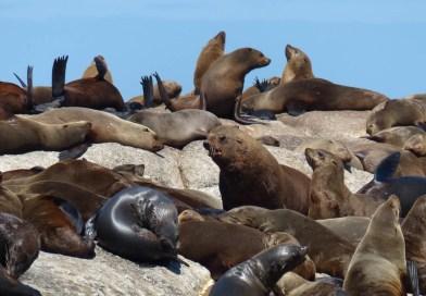 Viele Tiere rund um Kapstadt (Foto: Jörg Düspohl)