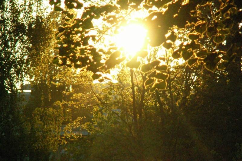 Innerer Grüngürtel: Sommer und Sonnenschein