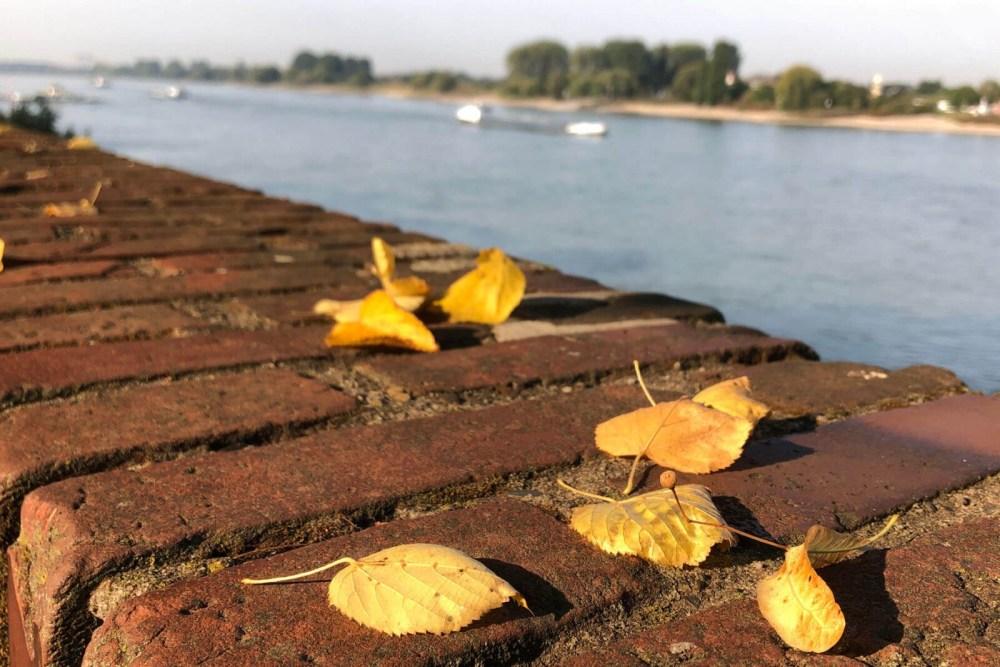 Kaiserswerth: Herbst am Rhein