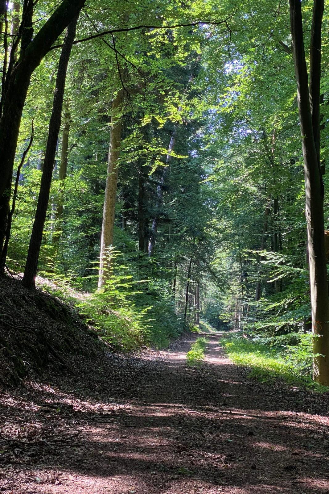 Südliche Weinstraße: Aktivwoche in Bad Bergzabern in Rheinland-Pfalz
