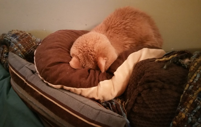 21-year-old-cat-adopted-kidney-failure-tumor-tigger-adriene-buisch-13