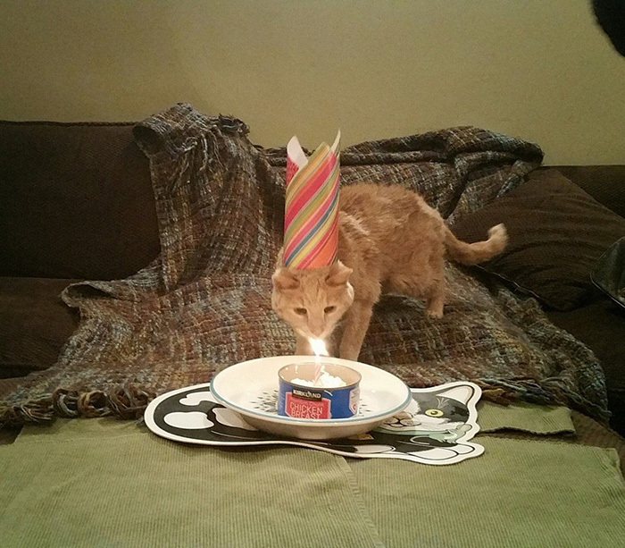 21-year-old-cat-adopted-kidney-failure-tumor-tigger-adriene-buisch-17