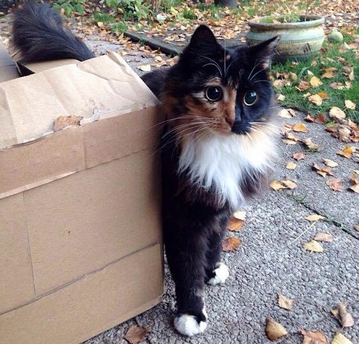 blind-cat-chimera-calico-jasmine-sandra-coudray-5