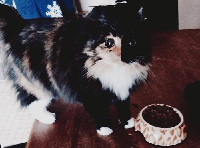 blind-cat-chimera-calico-jasmine-sandra-coudray-6