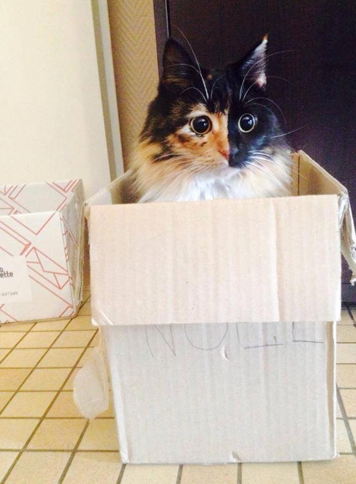 blind-cat-chimera-calico-jasmine-sandra-coudray-9