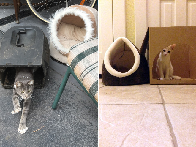 These cat owners are wishing they'd spent their money elsewehere.