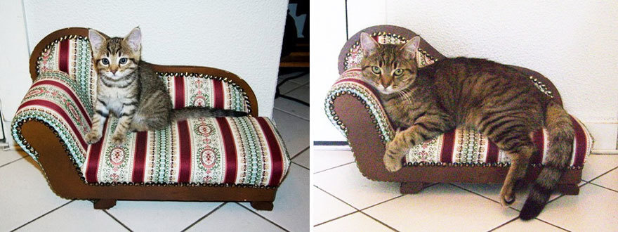 A fancy cushion suited for this gorgeous pet.