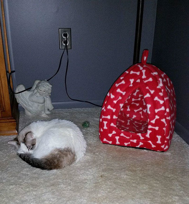 And finally, this cat, who would rather sleep near a bed than in one.