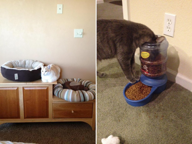 These cats just don't get what it means to live in a life of luxury.