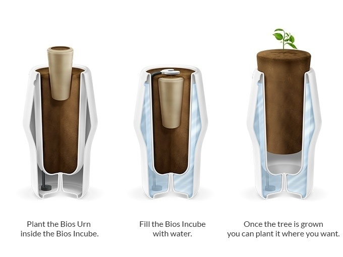 There are two major components; the Bios Incube and the Bios Urn. The first works as the incubator and the second as the capsule holding the seed, human remains, and soil.