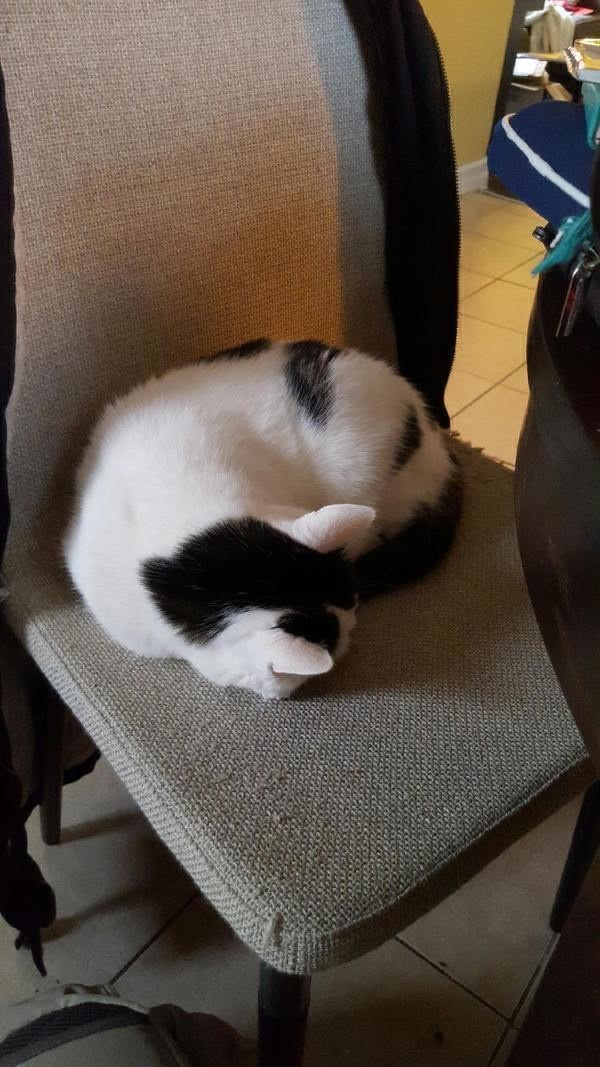 This cat's rear end looks like an adorable panda.