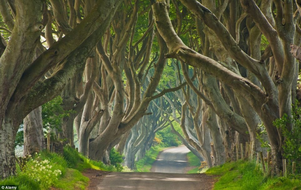 Dark Hedges (Game of Thrones)