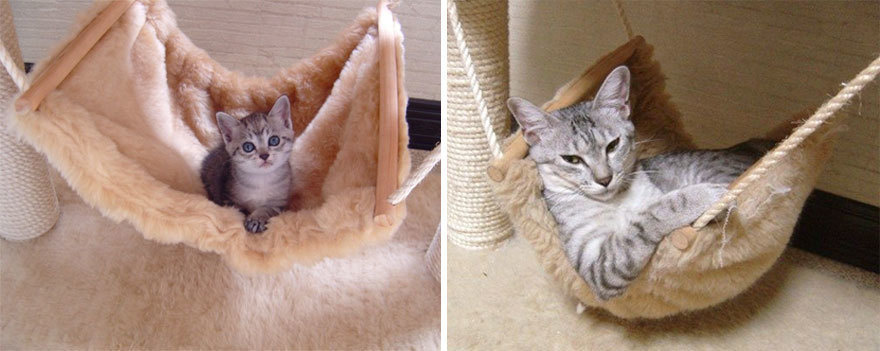 Just a cat in a hammock.